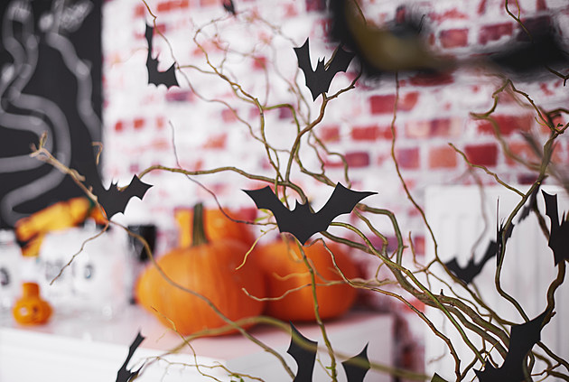 Halloween with bats and pumpkin decorations